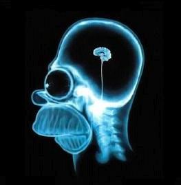 wpid88-cerveau-omer-2008-02-3-11-58.jpg